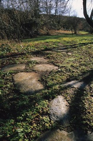 Cassia Antica.punto 5 (1)