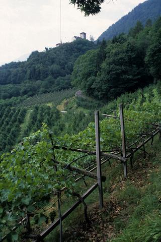Marlengo vigne