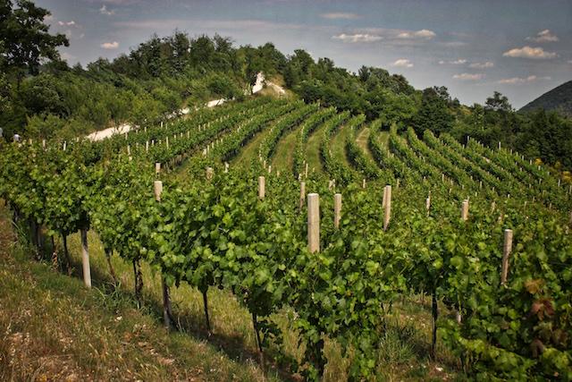 Vigne Monte Fasolo