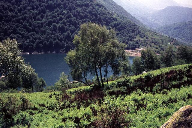 Lago.Delio