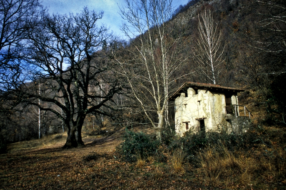 Rogolone.Gottro04