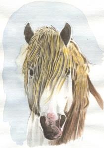 Cavallo.camarguese
